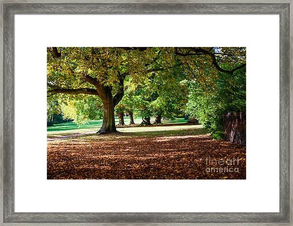 Autumn Walk In The Park Framed Print