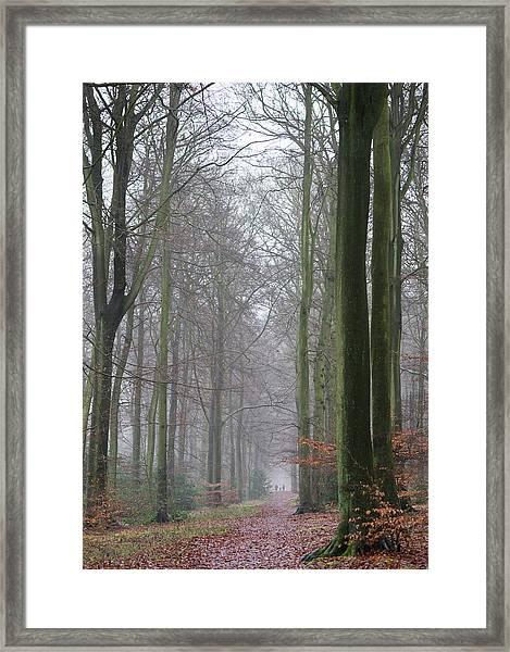 Autumn Woodland Avenue Framed Print