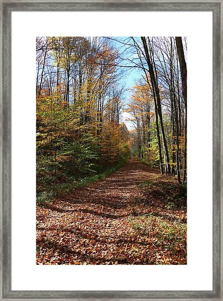 Autumn Woods Road Framed Print