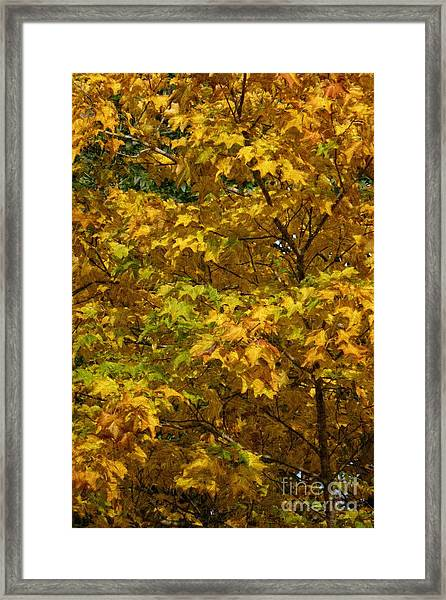 Autumnal Leaves And Trees 2 Framed Print