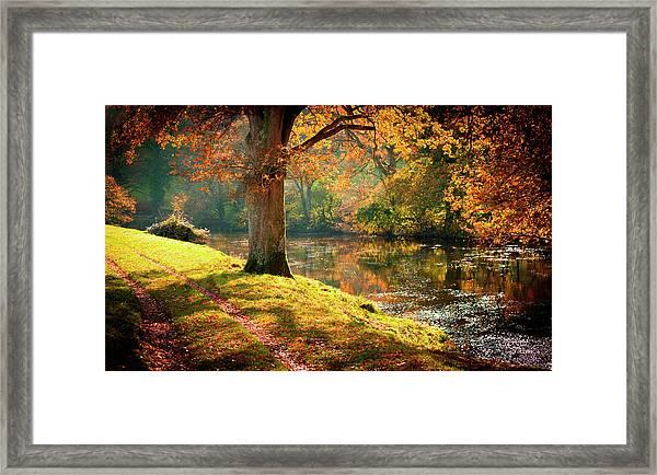 Autumnal Tamar River Walk, Devon, England. Framed Print