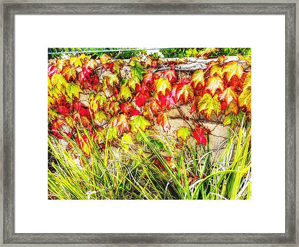 Autumn's Kiss Framed Print