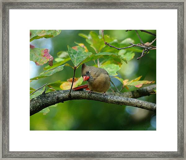 Available Shelter Framed Print