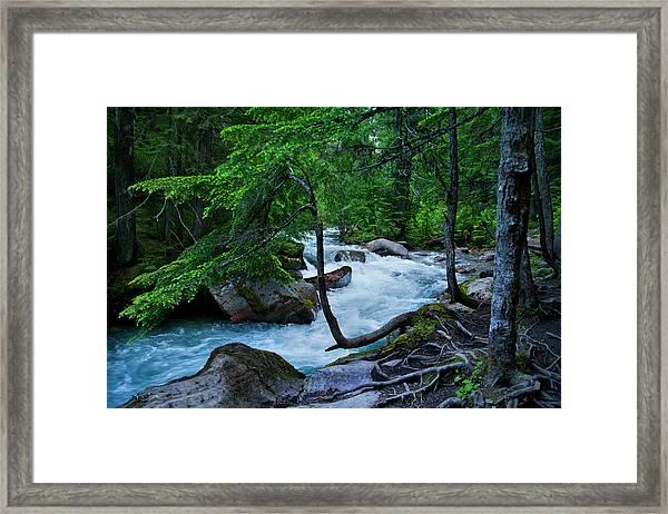 Avalanche Creek Framed Print