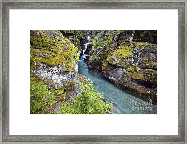 Avalanche Gorge In Glacier National Park Framed Print