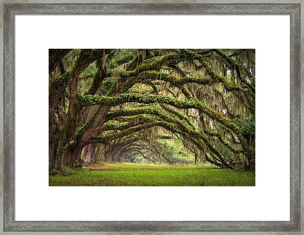 Avenue Of Oaks - Charleston Sc Plantation Live Oak Trees Forest Landscape Framed Print