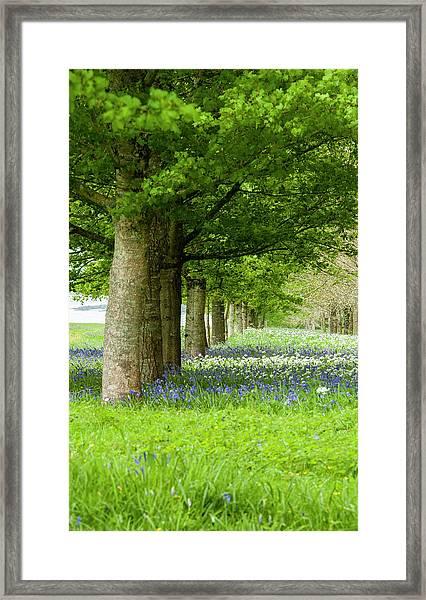 Avenue Of Trees Framed Print