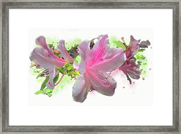 Framed Print featuring the digital art Azalea #2 by Gina Harrison