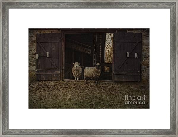Ba Ram Ewe Framed Print