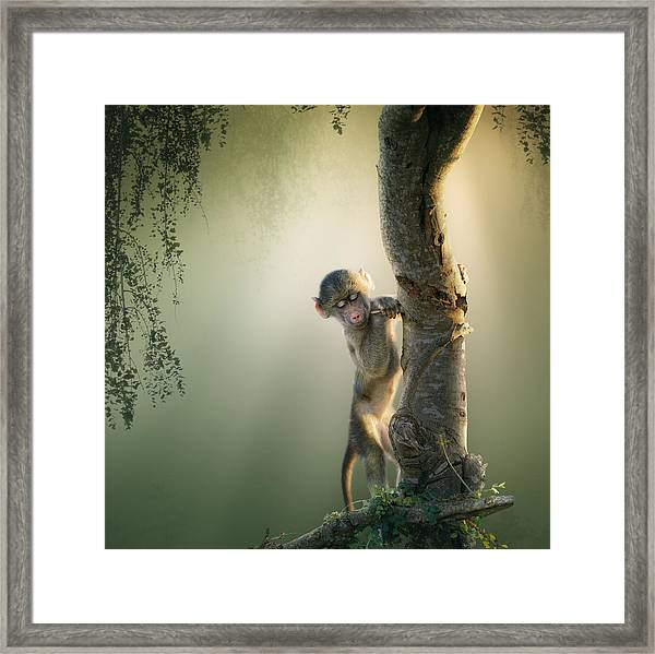 Baby Baboon In Tree Framed Print