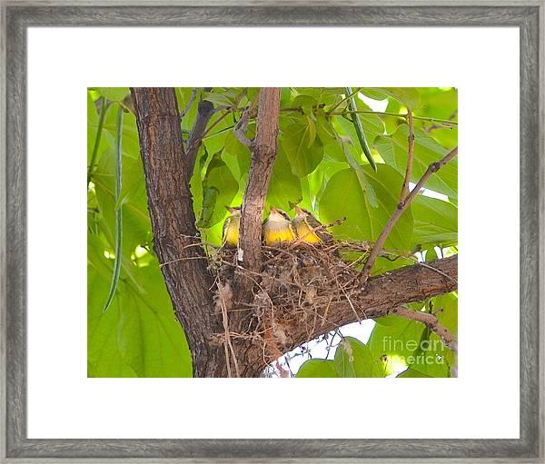 Baby Birds Waiting For Mom Framed Print