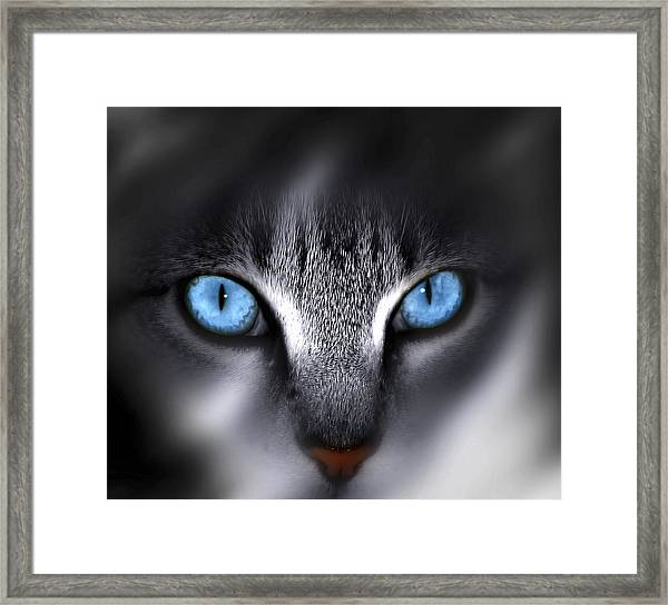 Baby Blues Framed Print