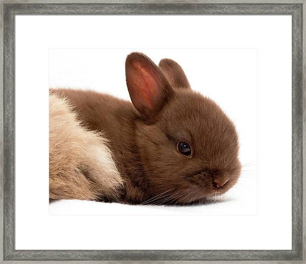 Baby Bunny  #03074 Framed Print