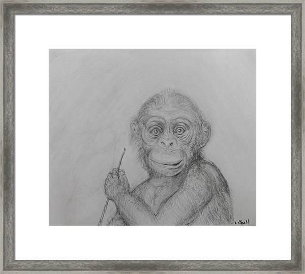 Baby Chimp Framed Print