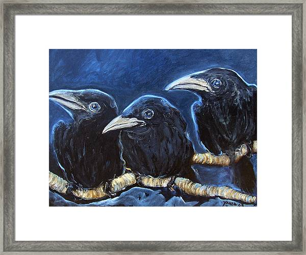 Baby Crows Framed Print