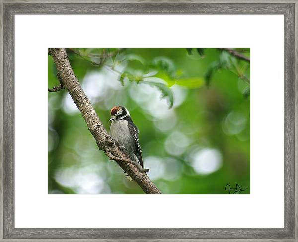 Baby Downy Framed Print