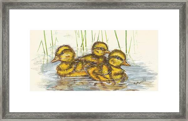 Baby Ducks For Ma Framed Print