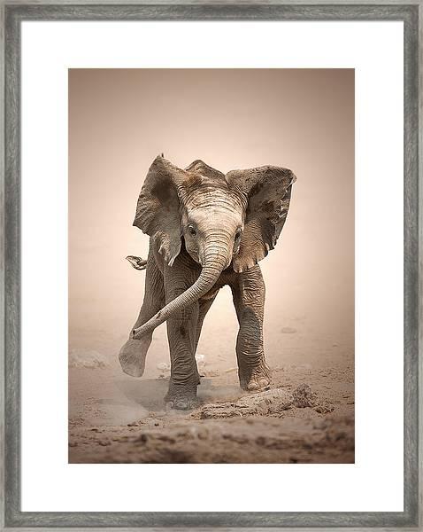 Baby Elephant Mock Charging Framed Print