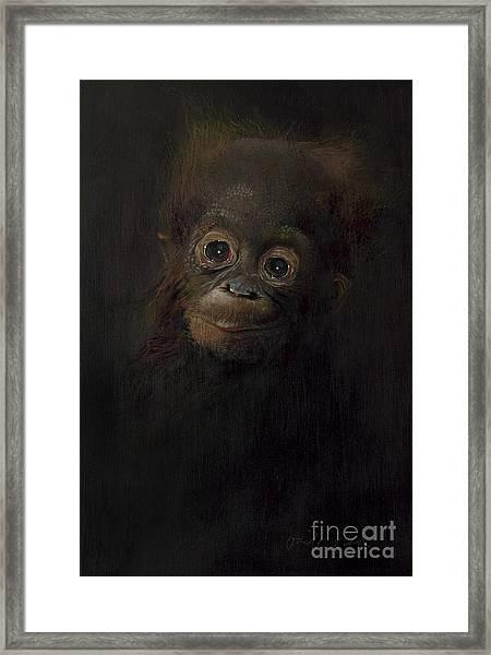 Baby Orangutan  One Framed Print