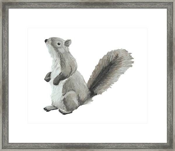 Baby Squirrel Framed Print