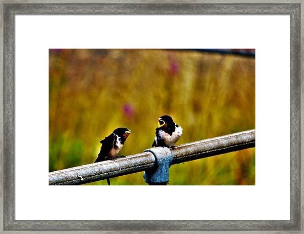 Baby Swallows Framed Print