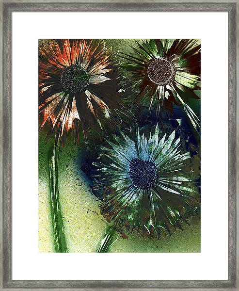 Bachelor Button Trio Framed Print