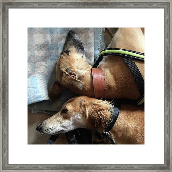 Back 2 Back - Ava And Finly Relaxing At Framed Print