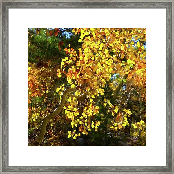 Back Lit Aspen Tree A Stylized Landscape By Frank Lee Hawkins Framed Print