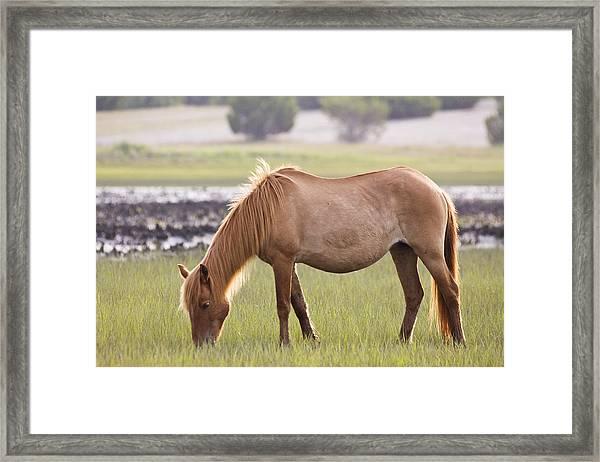 Back-lit Wild Horse Framed Print