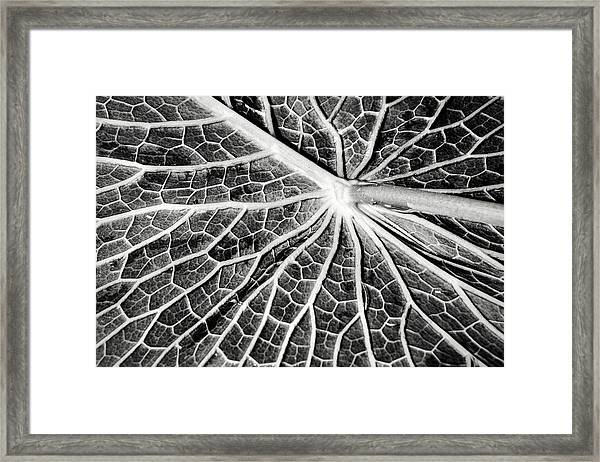 Back Of A Water Lily Pad Framed Print