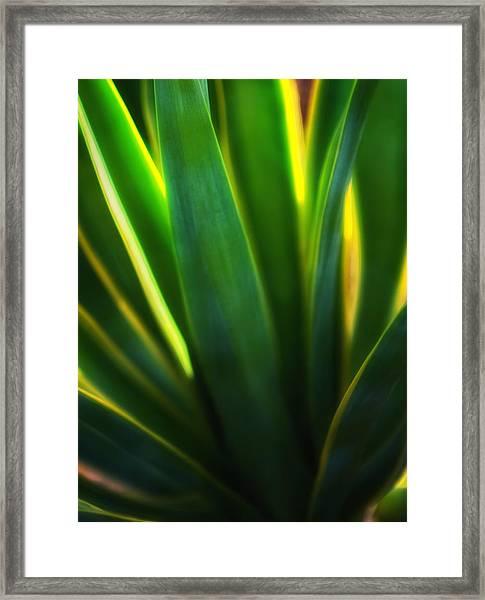 Backlit Agave  Framed Print
