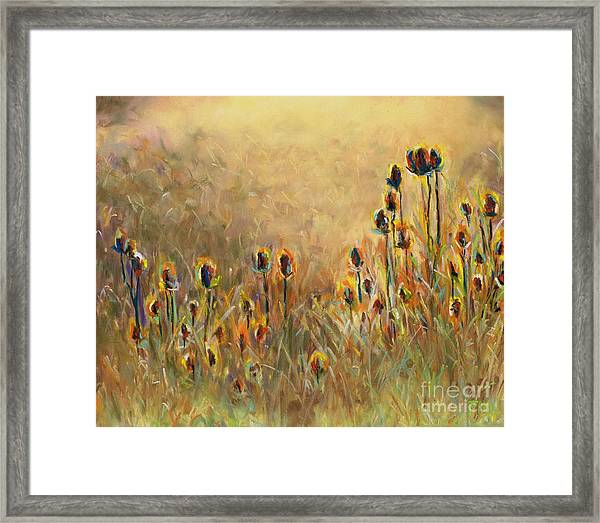 Backlit Thistle Framed Print