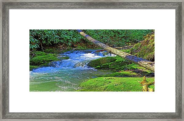 Backwoods Stream Framed Print