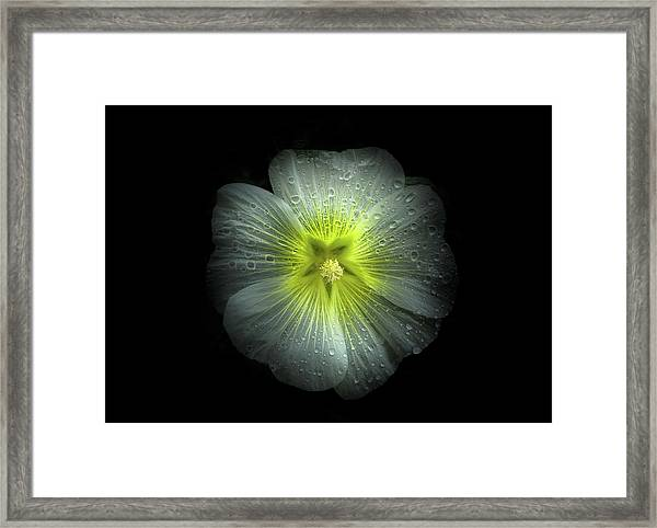 Backyard Flowers 62 Color Version Framed Print
