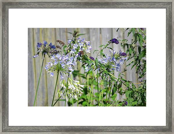Backyard Flowers Framed Print