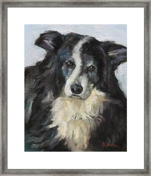 Bailey Framed Print