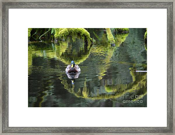 Bainbridge Duck Framed Print