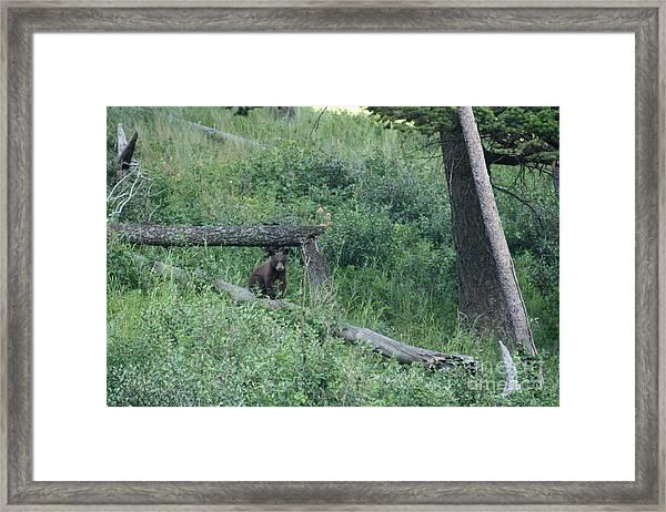 Balance Beam Framed Print