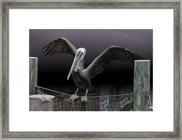 Balancing Act - Pelican Framed Print