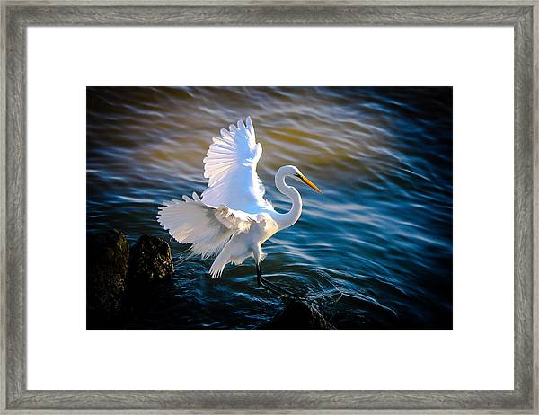 Balancing Act  Great White Egret  Framed Print