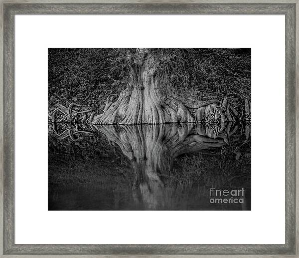 Bald Cypress Reflection In Black And White Framed Print