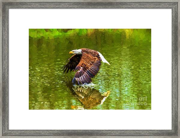 Bald Eagle Cutting The Water Framed Print