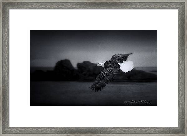 Bald Eagle In Flight Framed Print