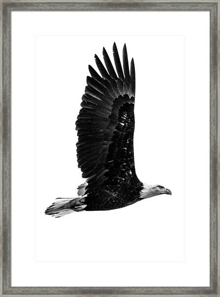 Bald Eagle Framed Print