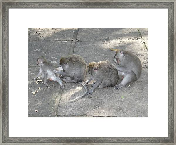 Balinese Monkey Flea Time Framed Print by Exploramum Exploramum