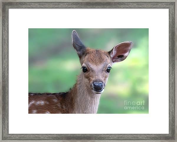 Bambi Framed Print