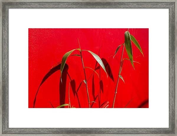 Bamboo Against Red Wall Framed Print