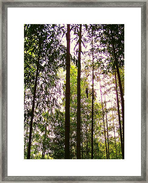 Bamboo And The Cuckoo Framed Print by Michael C Crane