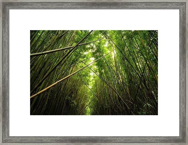 Bamboo Forest Framed Print