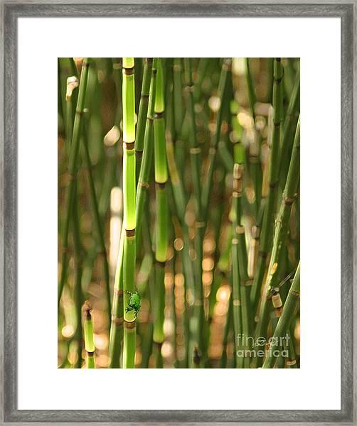 Bamboo Frog Framed Print